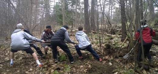 Students removing buckthorn from school grounds. Courtesy of Ms. Kornfeld